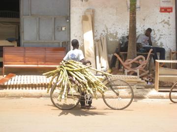 Sugarcane delivery